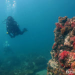 coral reefs diving samae san trip photos