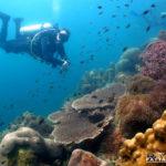 Coral Reefs - Scuba Diving Thailand Pattaya Dive Trips